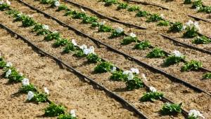 Da israele l 39 irrigazione a goccia arriva in lombardia for Sistema irrigazione a goccia