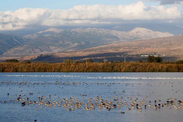Uccelli migratori in Israele