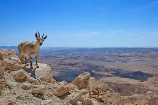 Nahal hashoalim nel Negev, per cui è stato lanciato un bando di costruzione di due complessi turistici