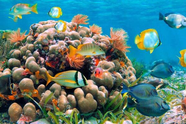 La barriera corallina nel Mar Rosso